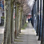 Tree lined at Preston Docks