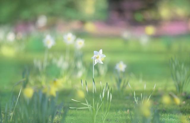 Morning Meadow..