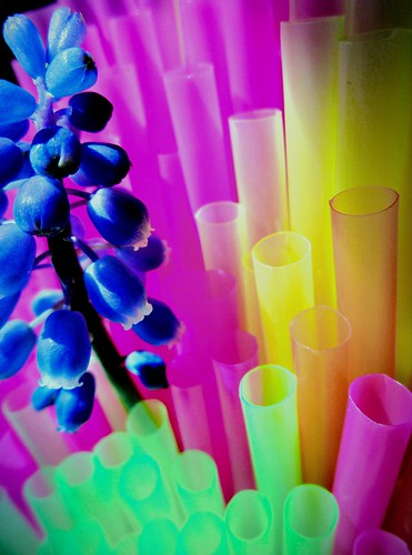 layers grapehyacinths colorfulstraws macro seanwalsh lovepeace colour happybrightphotography multicolour muscararmeniacum happy hmm springflower bristol 30032020 macromondays layer delicatecolours softnessofcolour pink yellow orange green drinkingstraws