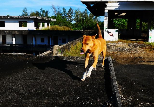 ,, Rocky - The Dog Palace ,,
