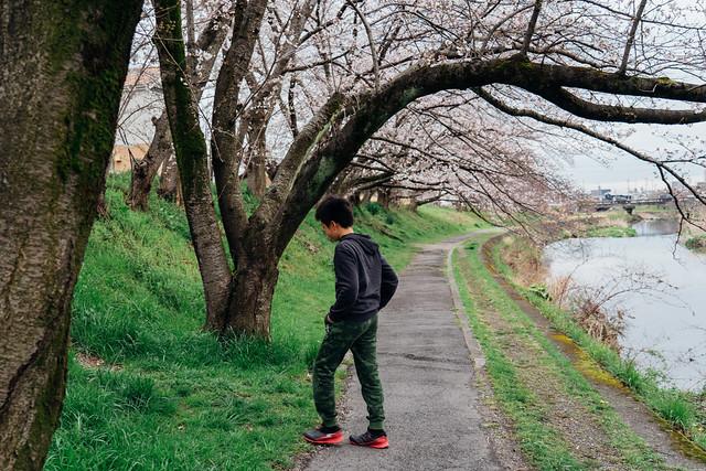 Cherry_blossoms2_03