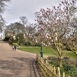 Spring at Avenham Park, Preston