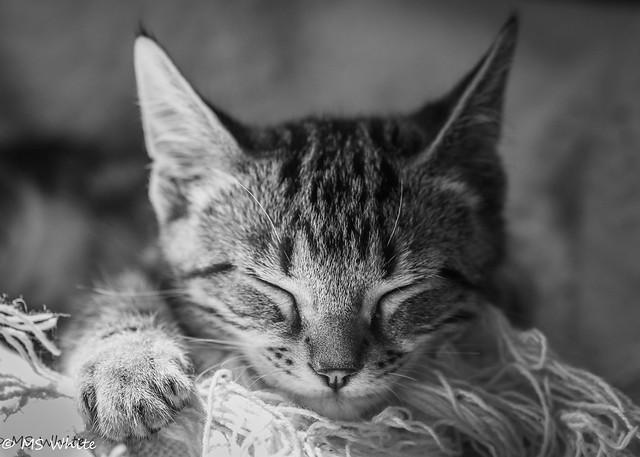 Sleeping cutie...Happy Caturday!
