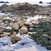 Mouette dans les rochers de la pointe Corbière