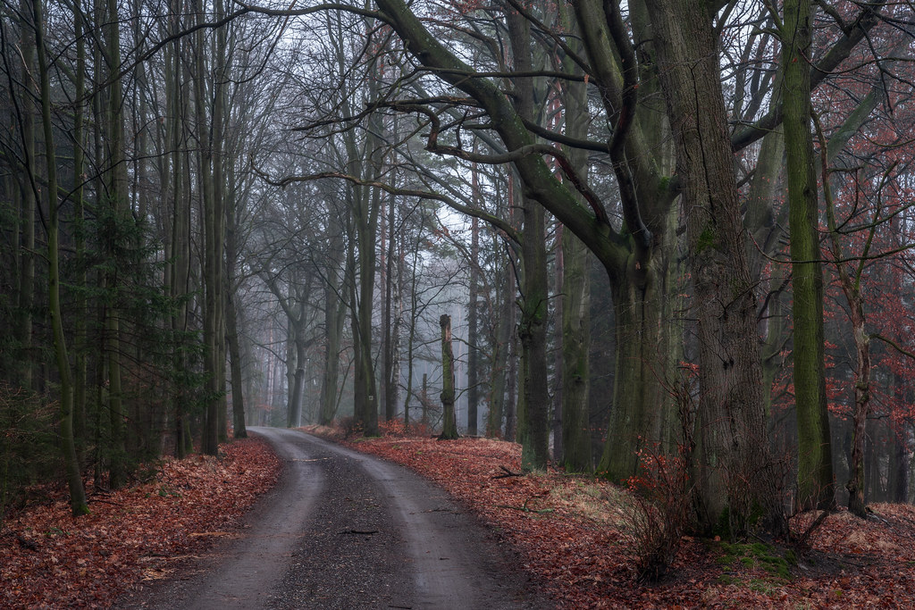 A walk in the forest - Spaziergang im Wald