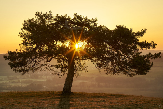 the tree that begged the sun to rise again