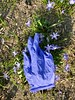 Medical glove (touch-and-go series) Springtime in Germany