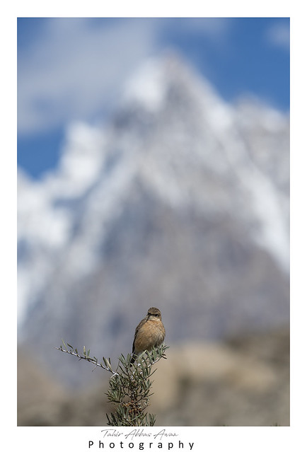 STone chat and Famous Passu cones