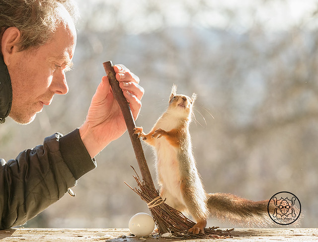 red squirrel holding an broom with a man