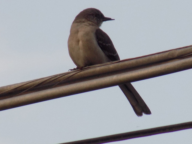 Perched On A Wire.
