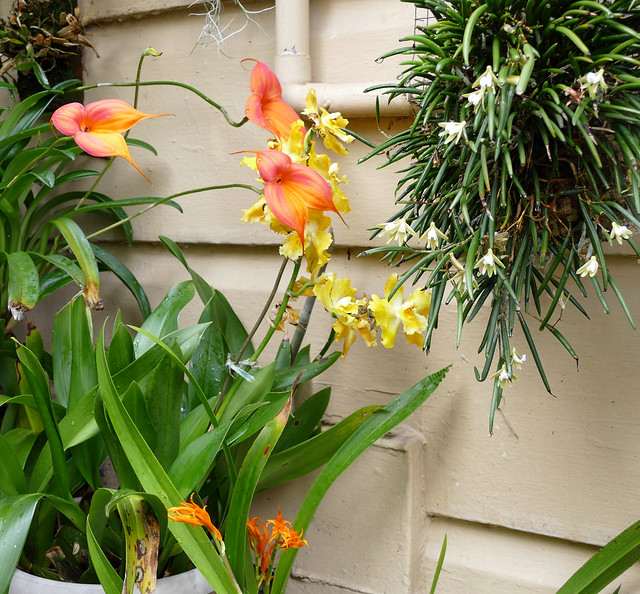 orchids on the stairs 3-20