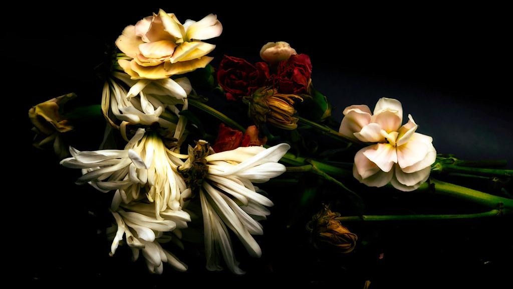 macro daisy