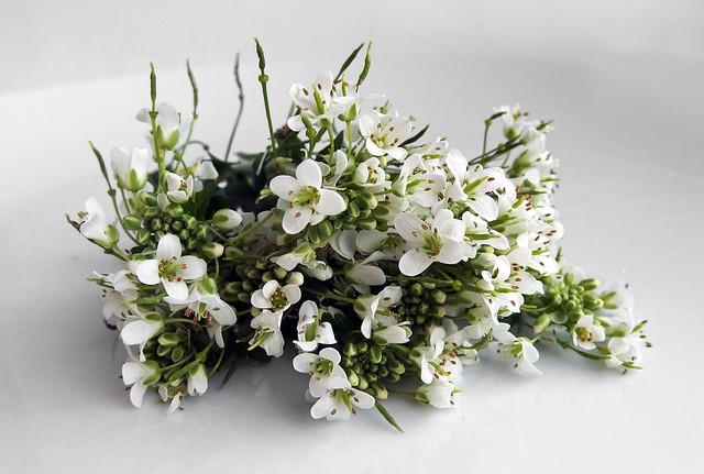 Wasabi Bloemen