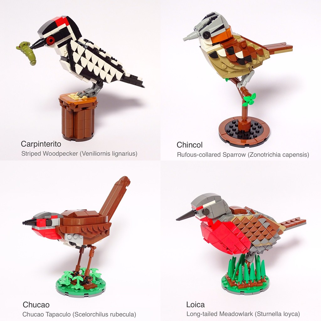 Chilean Birds