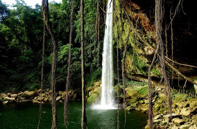 MEXICO, Chiapas , Wasserfall von Misol Ha, nahe Palenque, , 19625/12523
