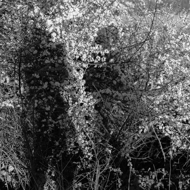 Social Distancing - Talking Shadows
