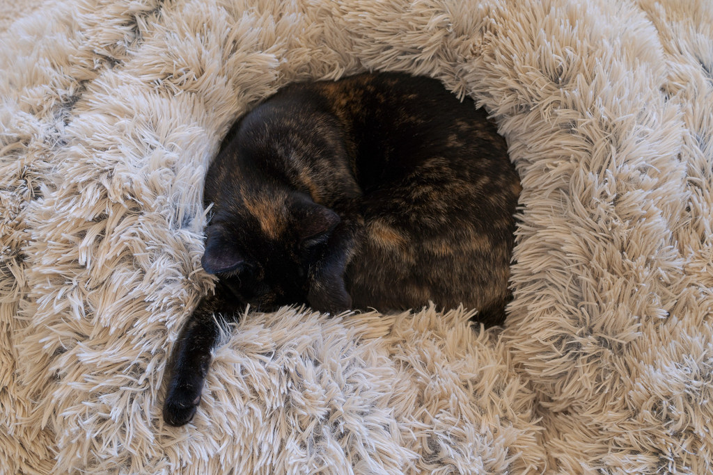 Out cat Trixie sleeps deeply ensconsed in a plush cat bed with one leg jutting out in December 2019