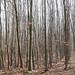 Waldbild - Langerwehe   March 2020