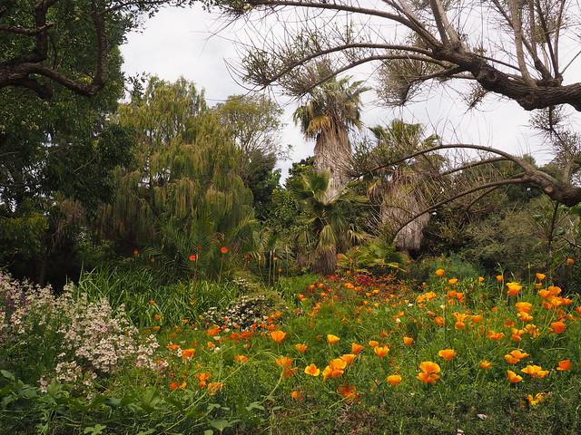 Cuando visitabamos jardines botánicos