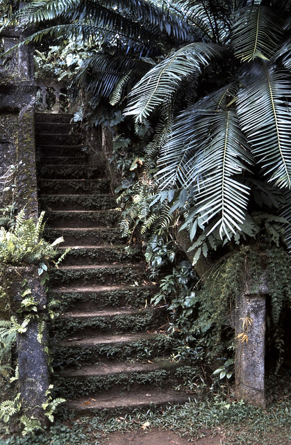 Villa im Urwald, Villa in the jungle
