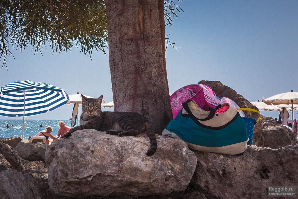 Кирп Ларнака море коты