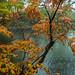 Fall Colour - Fukidashi park in Kyogoku (Hokkaido prefecture)
