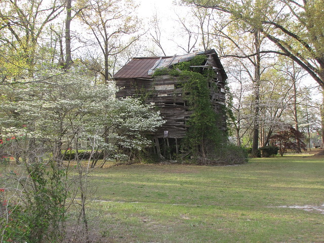 Dogwood and Tobacco Barn