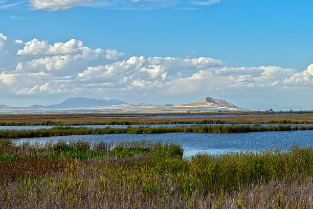 Cutler Marsh in Cache Valley, Utah.