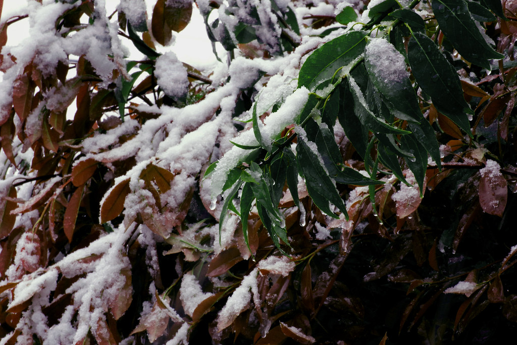 のしかかる雪