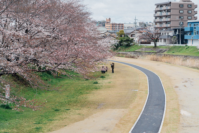 CherryBlossoms3_10