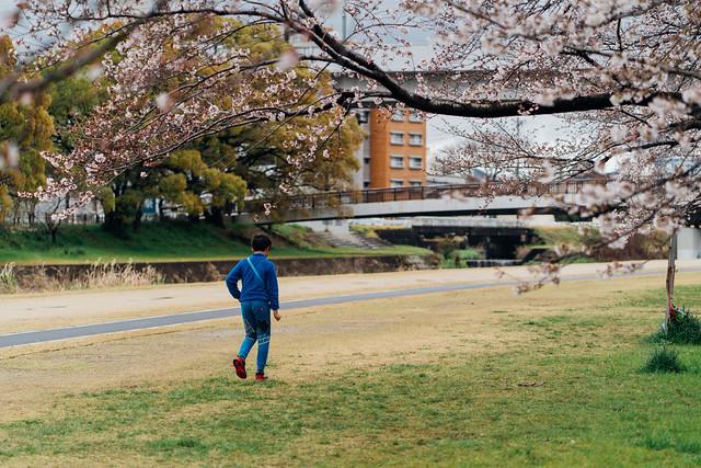 CherryBlossoms3_03