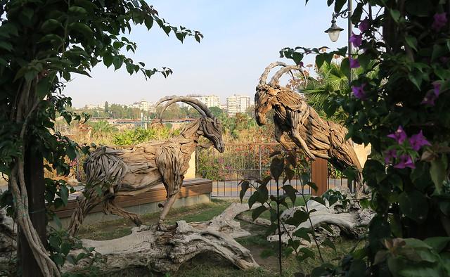 Chamois - Keçili Park - Antalya - Turkey