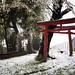 Cherry Blossom, Snow & A Shinto Shrine, Tokyo