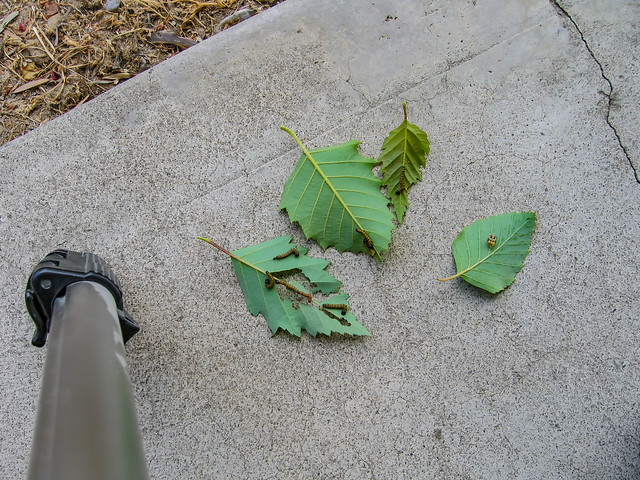 Eating Leaves 01