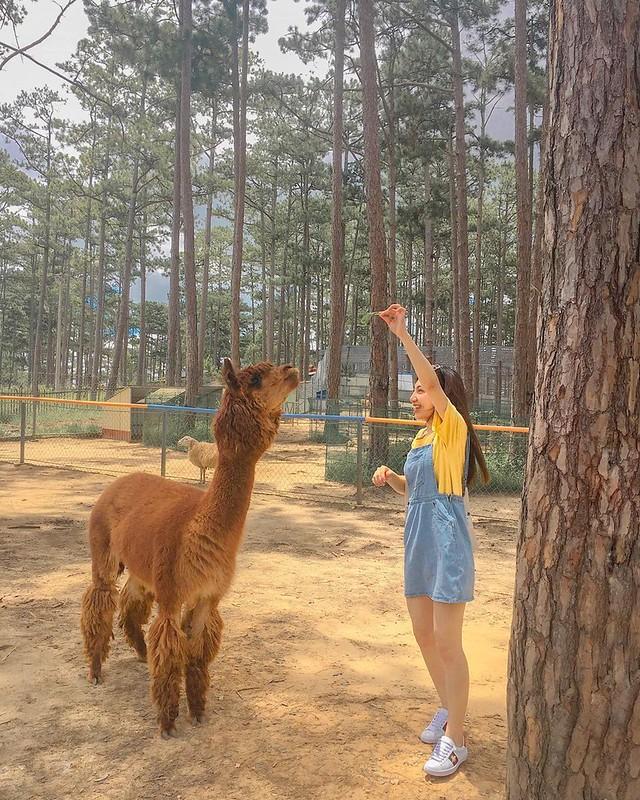 Phượt Hot - Khám phá vườn thú Zoodoo Đà Lạt cực kỳ đáng yêu (9)
