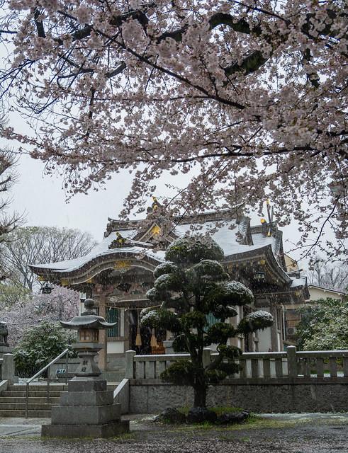 Hikawa jinja in the snow
