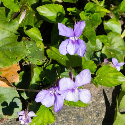 #lockdown #gardensafari dog violet