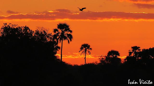 Sunset in Zimbabwe