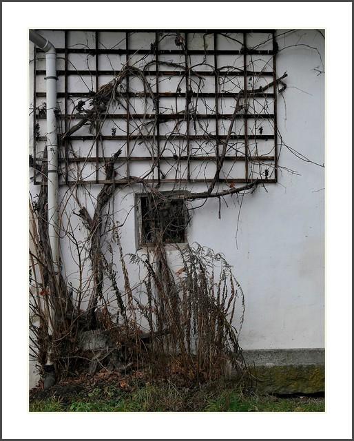 vergessene Spätlese in Ortenburg
