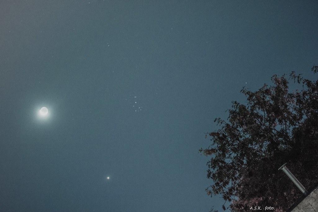 Conjunción Luna-Venus-Pléyades-Arbol.
