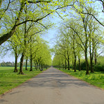 tree lined path at Haslam Park, Preston
