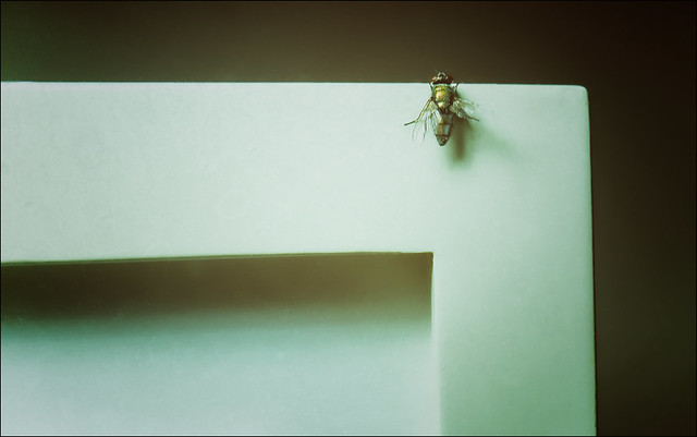 Uninvited Guest - Just Hanging Around!