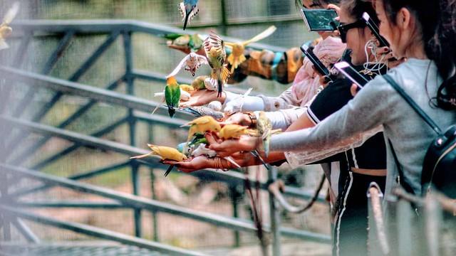 Phượt Hot - Khám phá vườn thú Zoodoo Đà Lạt cực kỳ đáng yêu (38)
