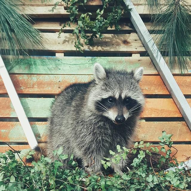 Phượt Hot - Khám phá vườn thú Zoodoo Đà Lạt cực kỳ đáng yêu (30)