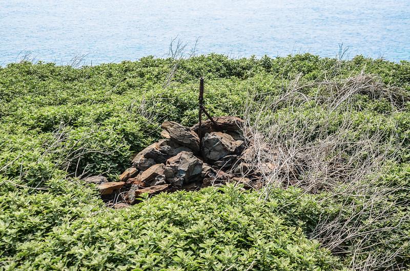 雞善嶼植被--石蓯蓉 (1)