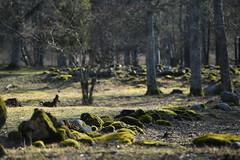 Deserted Iron Age villade