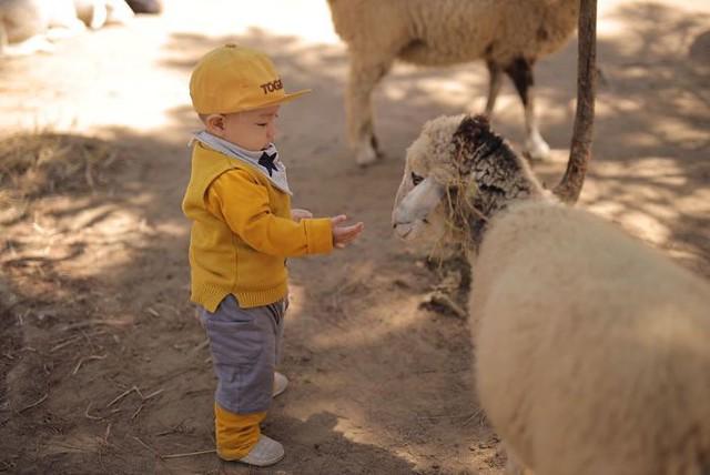 Phượt Hot - Khám phá vườn thú Zoodoo Đà Lạt cực kỳ đáng yêu (23)