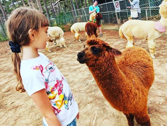 Phượt Hot - Khám phá vườn thú Zoodoo Đà Lạt cực kỳ đáng yêu (18)