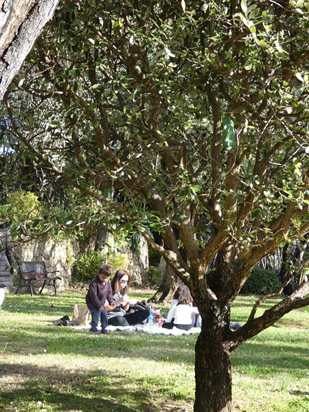 sous les oliviers de Grasse