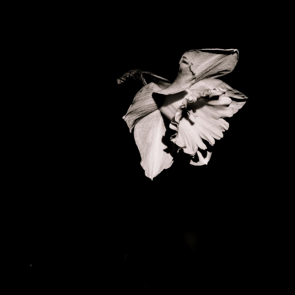 Noir et Blanc / Sépia / Désaturation partielle / Traitements divers 49711429813_3ea1111d41_o